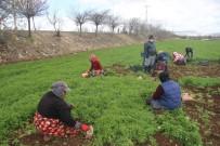 (Özel) Güneydoğu'nun Sebzesi Suriye Sınırından
