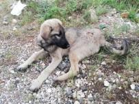 Aracın Çarptığı Yaralı Köpeğe Polis Sahip Çıktı