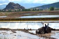 Osmancıklı Çeltik Üreticilerine Ekim Ruhsatı Uyarısı