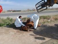 Otomobilin Çarptığı Yaralı Atı Hayvan Sever Çiftçinin Dikkati Kurtardı