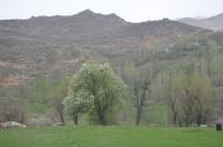 Şırnak'ta 1 Köy Karantinaya Alındı