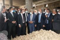 TMO'nun Patates Alımı Ahlat Çiftçisine Can Suyu Oldu