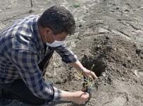 Erezyon Sahasına Antep Fıstığı Fidanı Dikildi