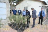 Ergani'de Çiftçilere Bin 600 Adet Zeytin Fidanı Dağıtıldı