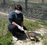 Göbek Bağları Dahi Kopmayan Yaban Domuzlarından Biri Hayata Böyle Tutundu