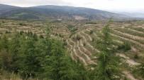Isparta'da 36 Milyon Fidan Toprakla Buluşturuldu