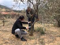 Alaşehir'de Tarım Ve Orman Müdürlüğü Ekiplerinden Tarım Alanlarında İnceleme