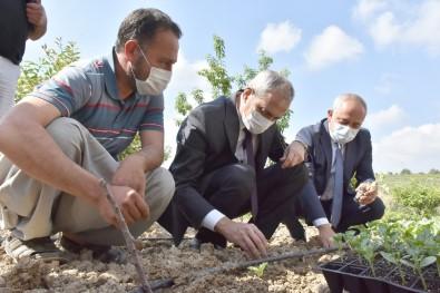 Başkan Bozdoğan, Yerli Tohumları Toprakla Buluşturdu