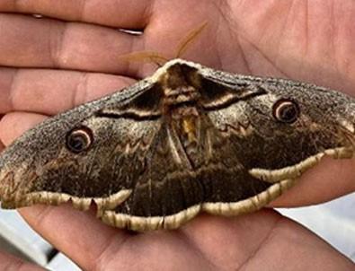 Dünyanın en güzel türleri arasında! Tam 16 santimetre boyunda...!!!