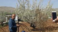 Gercüş'te Çiçek Açan Kiraz Bahçeleri Gelinliği Andırdı
