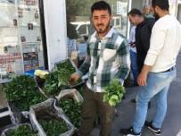 Silvan'da Sebze Fideleri Satışa Çıktı