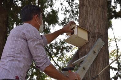 Viranşehir'de Parkalara Kuş Yuvası Yerleştirildi