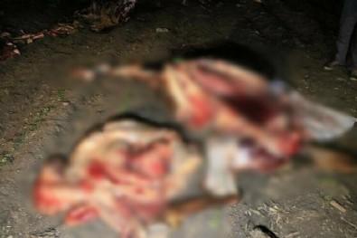 Adana'da kan donduran görüntü: Atların kesildiğini görenler polisi aradı