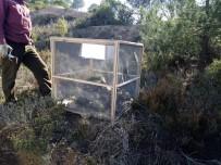Karabiga'da Çam Kese Böceği İle Mücadele Başladı