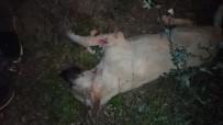Köpeği Acımasızca Öldürmüşler