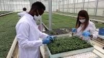 Pandemide Sebze Fidesine Talep Tavan Yaptı