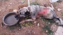 Tırın Çarptığı Köpek Hayvan Hastanesine Kaldırıldı