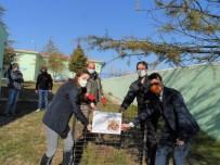 Kırklareli'nde 'Kırmızı Orman Karıncaları' Koruma Altına Alındı