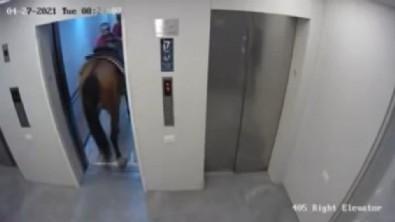 Asansöre at sokmaya çalışanlara gözaltı!