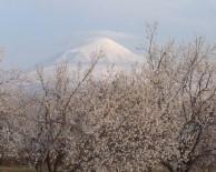 Ağrı Dağı Ve Kayısı Bahçeleri Görsel Şölen Oluşturdu