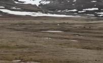 Ardahan'da Kara Akbabalar Görüntülendi