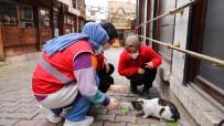 Safranbolu'dan Genç Kızılay Faaliyete Başladı