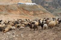 Siirt'te Büyük Ve Küçükbaş Hayvanlar İçin Küpeleme Başladı