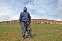 Yüksekova'da Karların Erimesiyle Koyunlar Meralara Çıkmaya Başladı