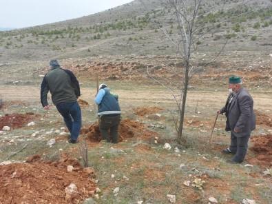 Altıntaş'ta ''Bal Ormanı'' Çalışmaları
