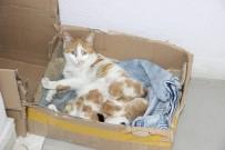 Doğum Sancısı Çeken Kedi Diş Kliniğine Geldi, Doğumu Burada Yaptırıldı