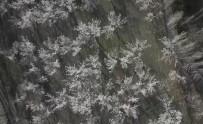 Iğdır'da Çiçek Açan Kayısı Ağaçları Göz Kamaştırıyor