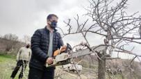 İlçeye Katma Değer, 24 Bin Yabani Menengiç Ağacında Antep Fıstığı Yetişecek