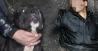PİTBULL - Tecavüz girişiminde bulunan adamı köpek yakaladı, esnaf dövdü!