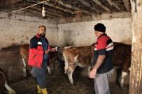 Iğdır'da Aşı Küpe Ve Hayvan Tespit Çalışmaları Devam Ediyor