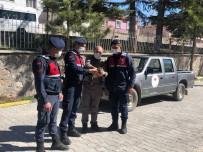 Jandarmanın Yaralı Halde Bulduğu 'Kulaklı Orman Baykuşu' Koruma Altına Alındı