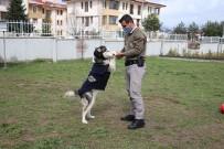 Polisler Ölmek Üzereyken Buldukları Köpeği Sağlığına Kavuşturdu