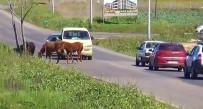 Sürücülerin Atlarla İmtihanı