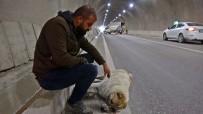 Yaralanan Köpeğinin Başından Bir An Olsun Ayrılmadı