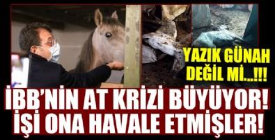 CHP'li İBB'nin at skandalı büyüyor! İşi ona havale etmişler!