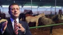 İBB'nin kayıp atlarıyla ilgili bomba iddia! Kuzey Irak'a mı satıldılar?