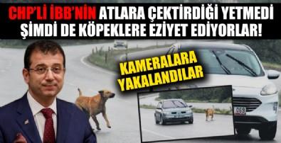 İstanbul köpekleri Kocaeli'ne atıyor