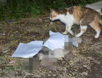 Kedi yavrusunun patilerini ve kuyruğunu keserek öldürdüler!