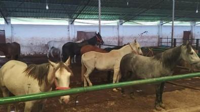 İBB'den merak edilen konu hakkında skandal itiraf! Adalar'daki 978 atın 224'ü bakımsızlıktan ölmüş! Peki ya diğerleri?