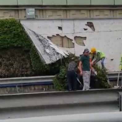 CHP'li İBB Başkanı Ekrem İmamoğlu yine dikey bahçe katliamında! Vatandaştan sert tepki!