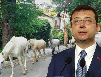 İmamoğlu'nun at rezaletinde günah keçisi bulundu!