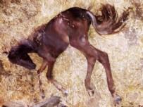 CHP'li İBB'nin sorumluluğundaki atlar bakımsızlıktan ve pislik içinde ölüyorlar