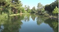 BOTANİK BAHÇESİ - Botanik Bahçe 300 Bitkiye Ev Sahipligi Yapiyor