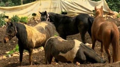 CHP'li İBB'nin kayıp atlar skandalında son dakika gelişmesi!