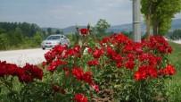 FARUK ÖZLÜ - Düzce Çiçek Açti