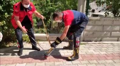 Isparta'da Güllerin Arasina Saklanan Yilan Yakalanarak, Dogaya Salindi